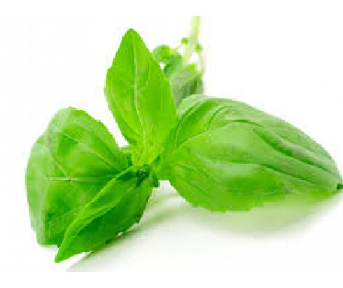 Basil Fragrance Oil